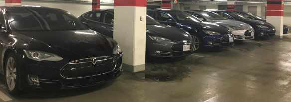row of Teslas