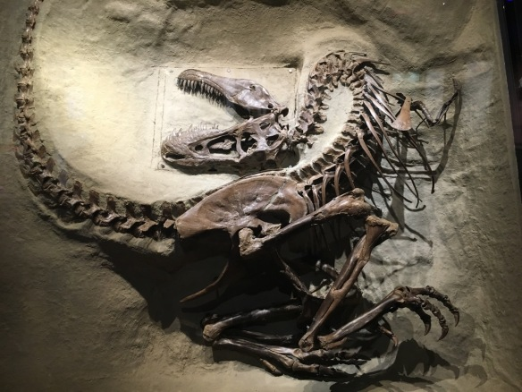 Drumheller Fossil